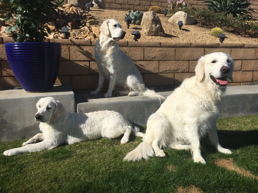Teddy Bear, and her two girls Aspen Bear and Avery Bear relaxing in the backyard in sunny Southern California.