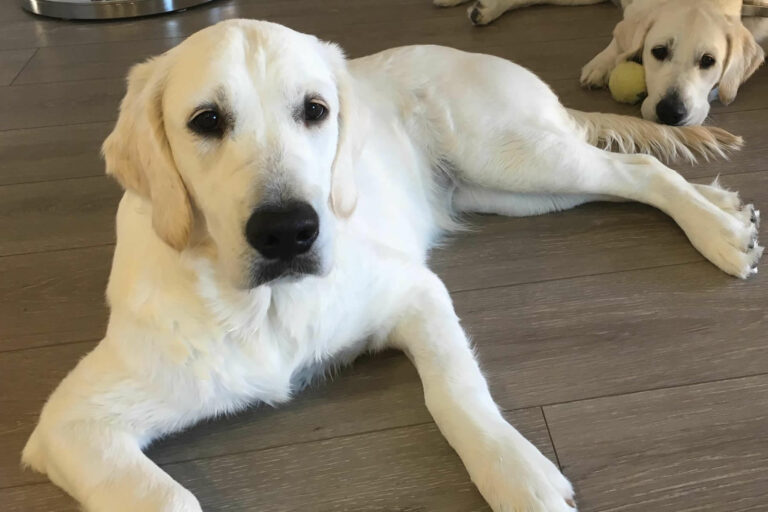 Avery Bear has wonderful confirmation. She loves to cuddle, enjoys playing with her sisters and all their toys in the backyard. She enjoys playing the water and running through the sprinklers.