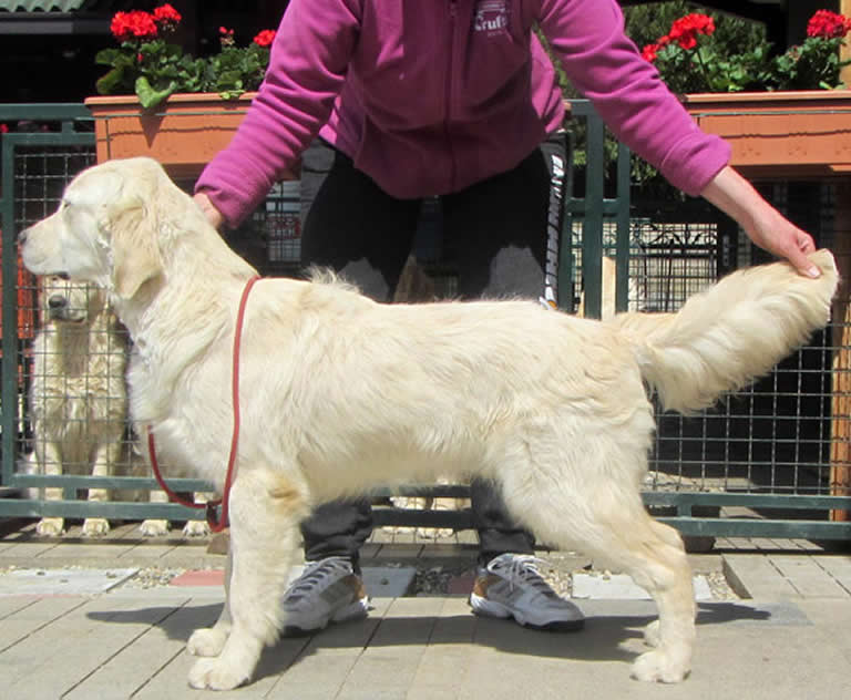 arley Sanitacteam Day comes from a wonderful breeder and kennel in Serbia